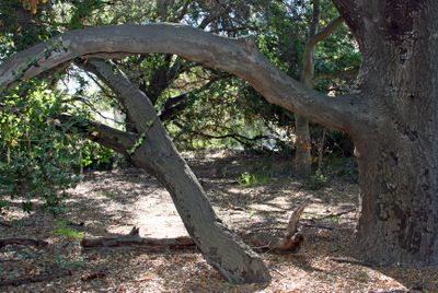 1casper's park jan 17_peaceful
