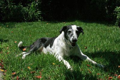 Big dog_may 19_2009