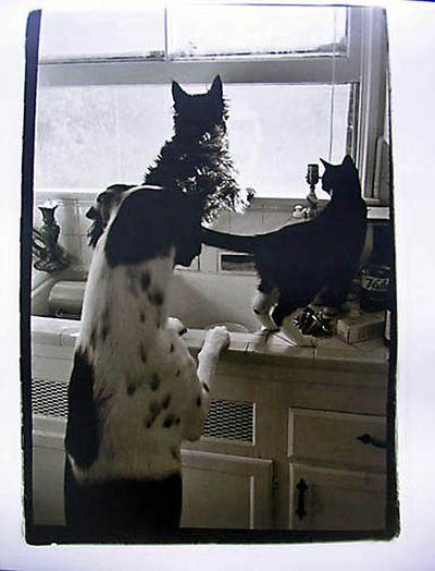 Simon, Dutch, & Teemu on 86th Pl kitchen window