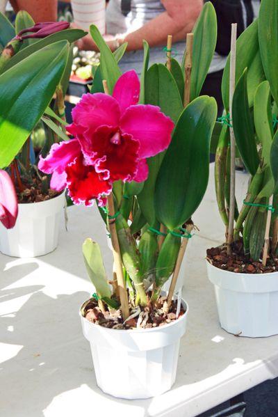Farmer's market sept 26_orchid