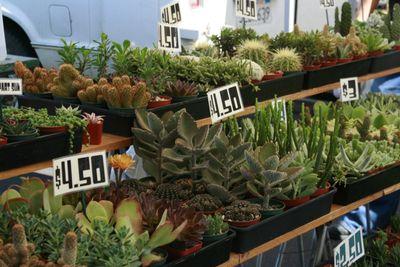 Farmer's market sept 26_cactus