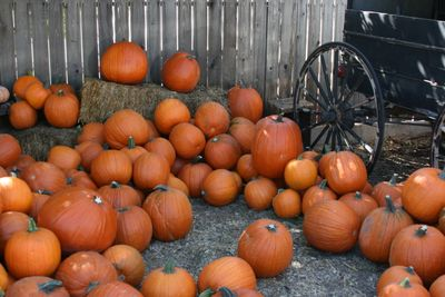 Apple Country_Oak Glen_October 3 065