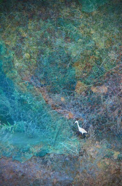 Bird sanctuary egret layered