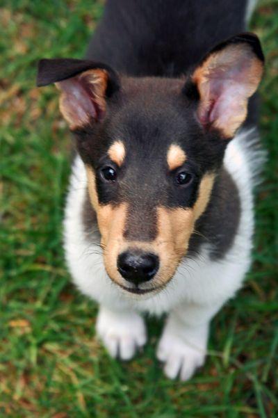 Faelan december 5 2009_one ear up one ear down
