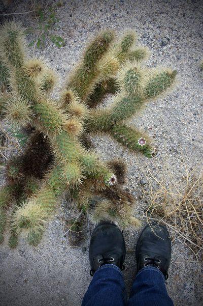 Boots cactus