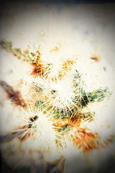 Lensbaby cactus