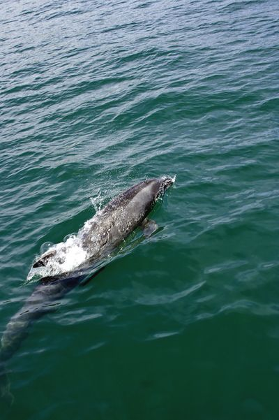 Whale watching 099