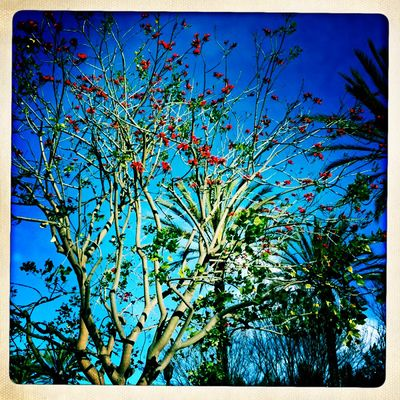 Red flowered tree