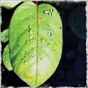 _water on leaf