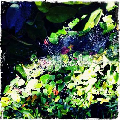 _water on web