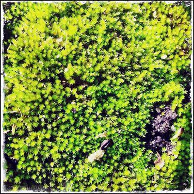 _moss fairy carpet