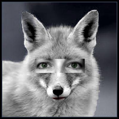Kelly the Fox