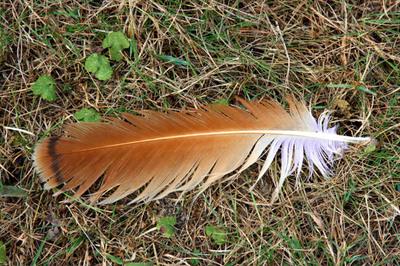 Magic_feather