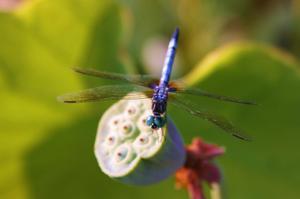 Dragonfly_2