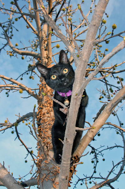 Cat_up_the_tree_030